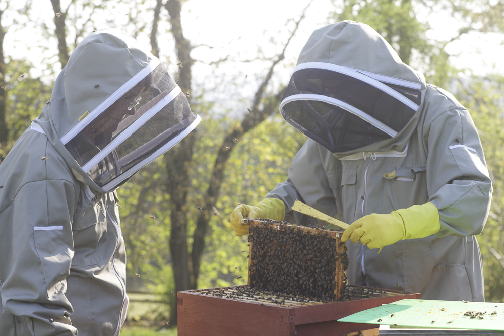 Two beekeepers opening a bee hive to have a good look at what's inside.
