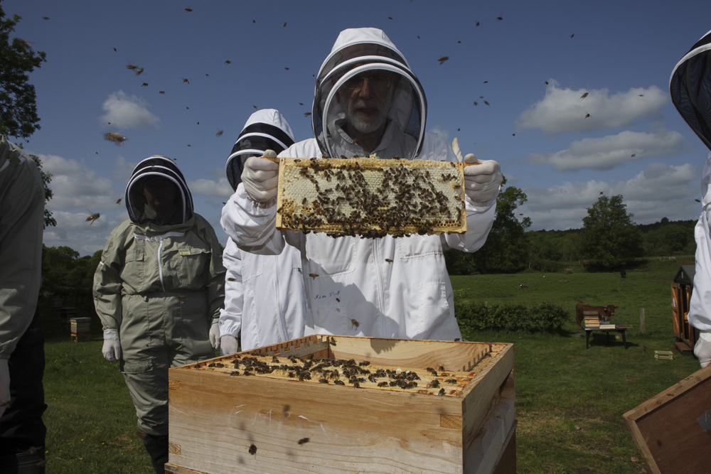 A beekeper in full outfit examining part of his bee hive.