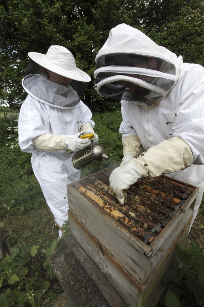 Two people looking at a bee hive.