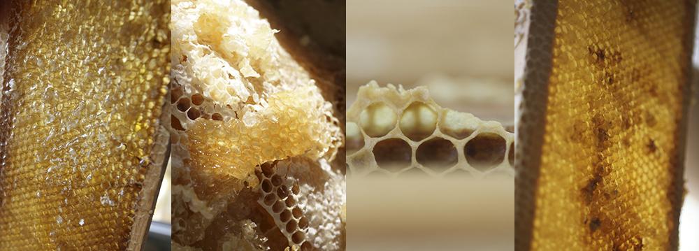 Close ups of golden honeycomb.