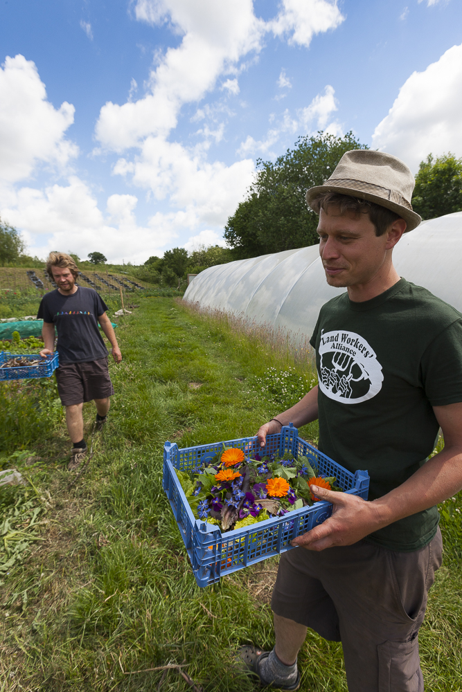 Ben Hanslip, Ragman's Lane Market Garden, David Broadbent Photography, copyright, grow, salads, producer, Danny Fisher