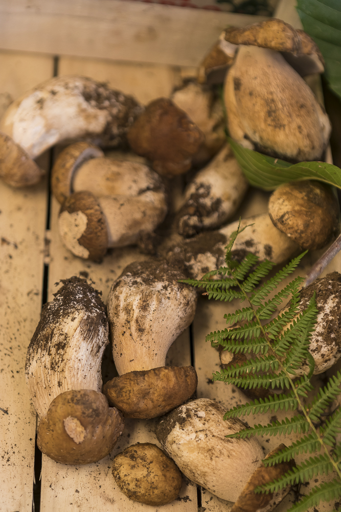 Foraged wild Cep porcini mushrooms