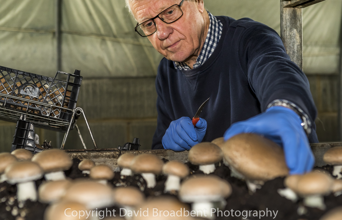 David Broadbent Photography, copyrighted, mushroom grower, farming, agriculture,