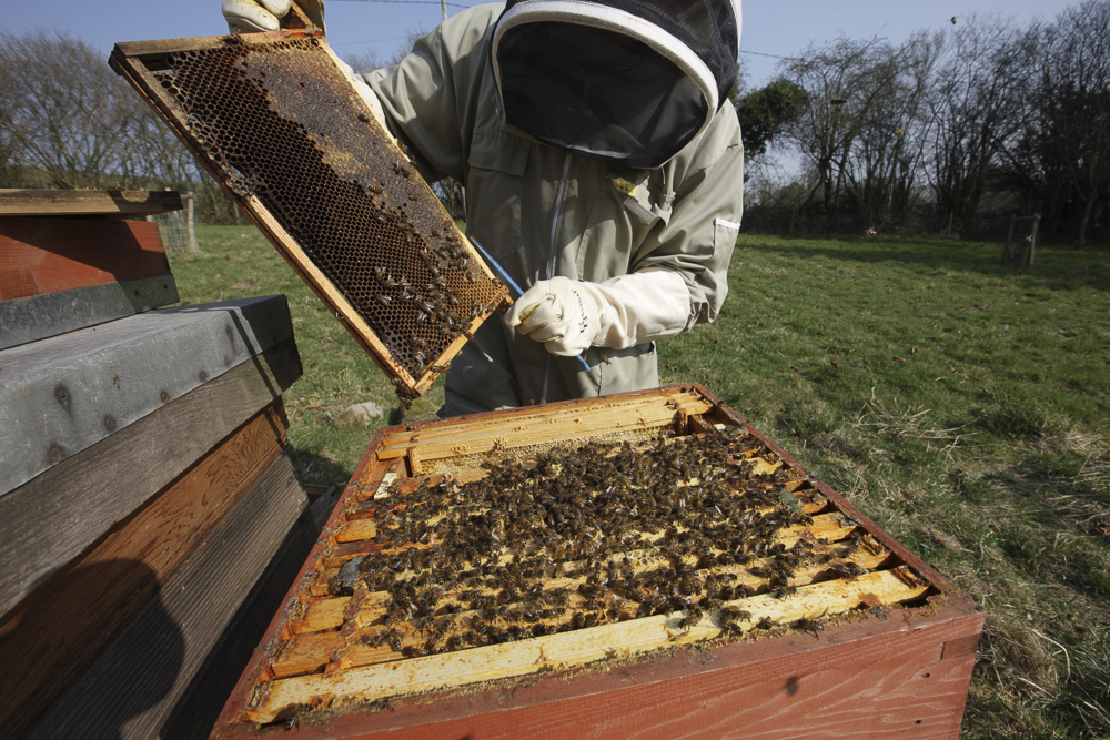 Beekeeper in action...